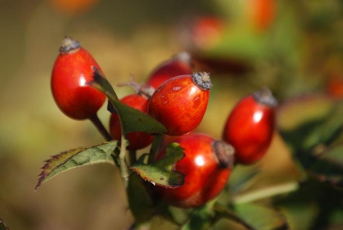 rozenbottelolie-mooie-huid