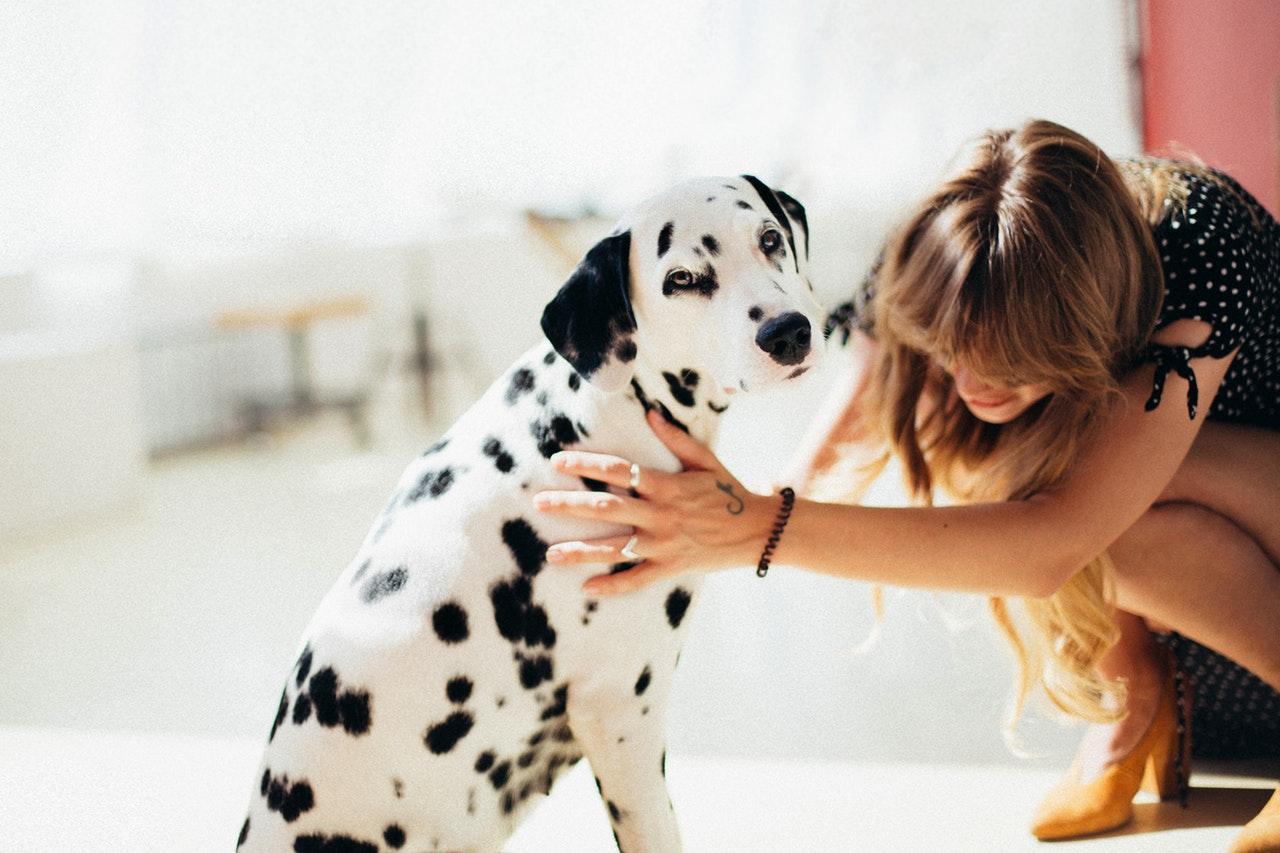 essentiele olien bij honden