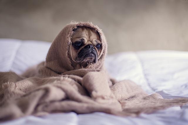 etherische olie giftig honden