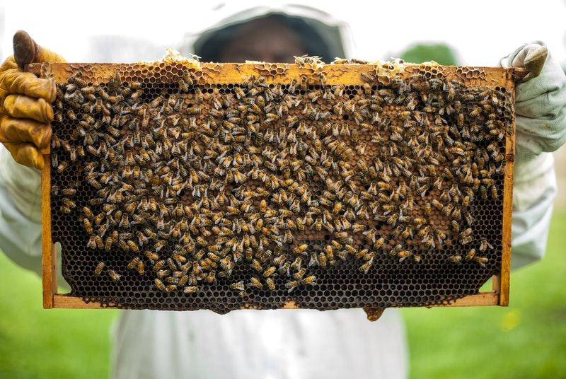 honing direct bij de imker kopen