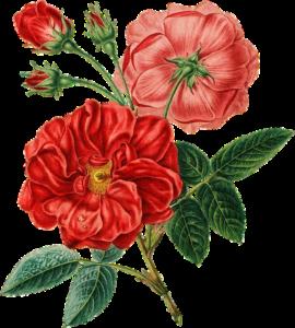 bloemen tuin pluk tuinen