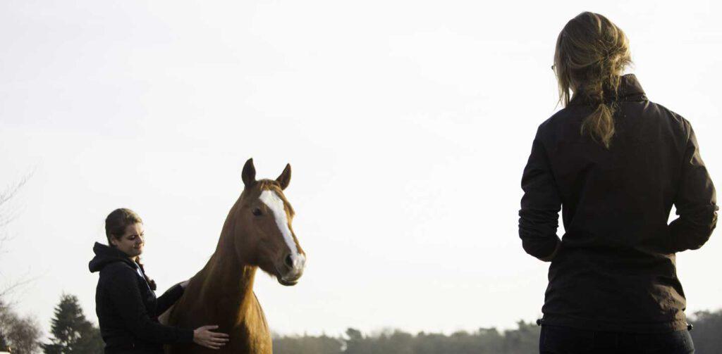 trainen met paarden coaching