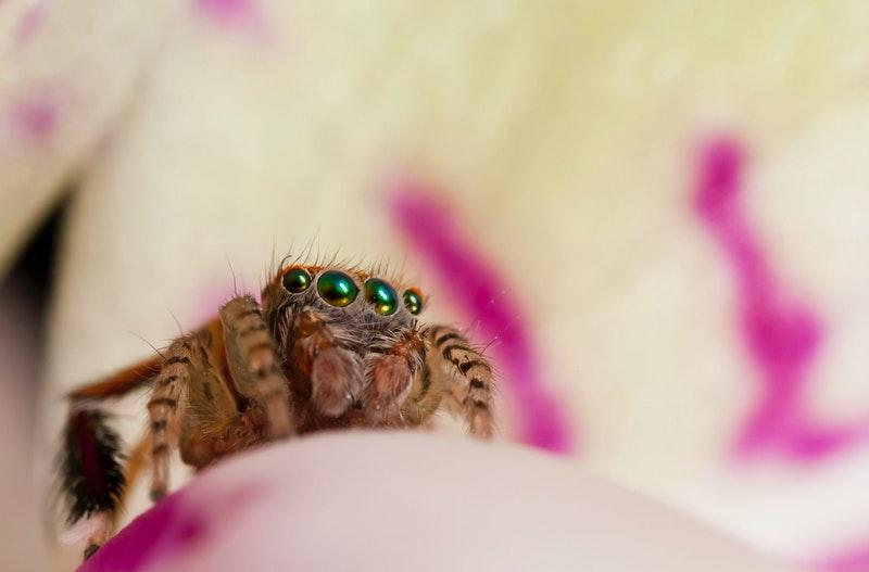 spinnen verjagen op natuurlijke manier