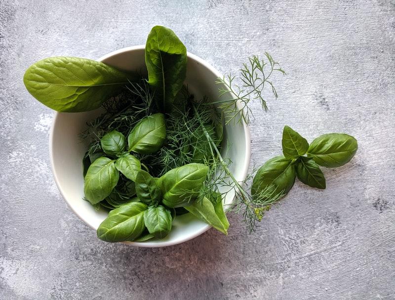basilicum kweken oogsten planten